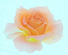 3 Best Roses Macro Photography by breathofanangel on Etsy, $15.00