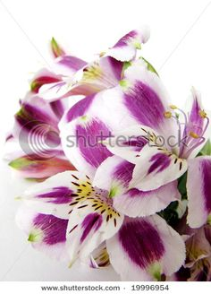 Lillies :) lavender and coral