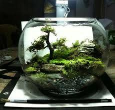 """Résultat de recherche d'images pour """"terrarium"""""""