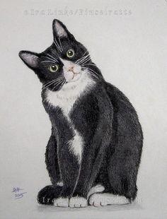 Socke  - Katze - Samtpfote - Pelznase - original Zeichnung, Drawing, Bild