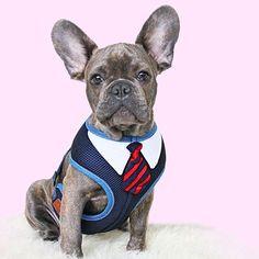Content filed under the Dog Houses taxonomy. Online Pet Supplies, Dog Supplies, Pug Life, Dog Houses, Zurich, Dog Accessories, Geneva, Dog Training, Switzerland
