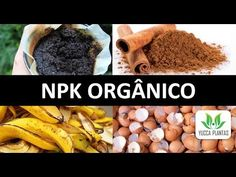 NPK ORGÂNICO: Aprenda a fazer do jeito certo! Podemos usar borra de café? - YouTube Pitaya, Growing Herbs, Agriculture, Flora, Tropical, Banana, Backyard, Nature, Places