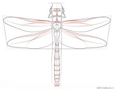 how to draw a ink dragonfly