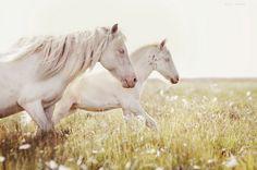faves   #horses #summer #sun