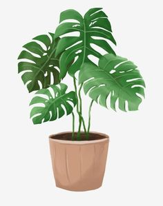 Brown Flower Pot Green Leaves Plantain Leaf Plant Cartoon Illustration PNG and PSD Plant Painting, Plant Drawing, Plant Art, Leaf Clipart, Flower Clipart, Clipart Images, Plant Cartoon, Cactus Illustration, Plant Wallpaper