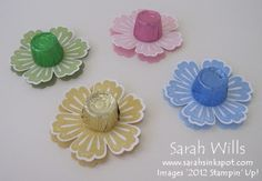 rolo flower blossoms - cute