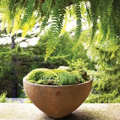Mosses aren't your average houseplants. Here's what you need to know about showing the plant a little customized TLC and keeping it thriving.