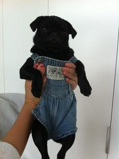 Proof That Pugs Make Literally Everything 100 Times Better #pug