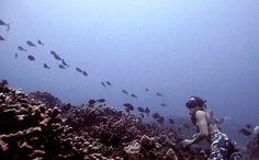 Leggings, underwater photography , makena surf wear , aloha , diver , free dive  www.makenasurfwear.com