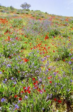 Springtime in Samaria - Israel - did I mention I love traveling? Find out about my favorite places at my blog: http://bit.ly/Israelblog