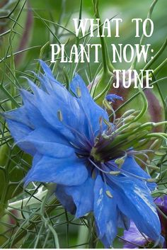 Summer may be upon us but there are still plenty of vegetable crops and flowers to plant this month. Here are my top picks for June.