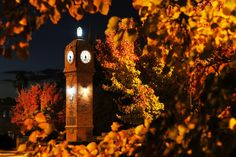 A photo of the Mudgee Town Clock in Autumn. Photo by Amber Hooper. First Photo, Autumn Leaves, Big Ben, The Dreamers, Amber, Scenery, Clock, Spaces, Architecture