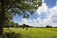 De weilanden rondom FarmCamps Hoeve Sonneclaer