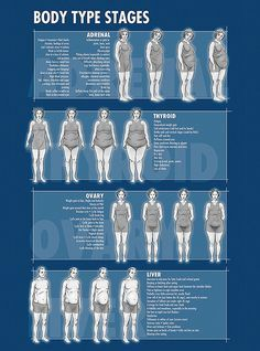 Body type stages