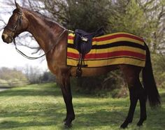 Burberry Fall Collection This a shawl that looks like a horse blanket. Too funny. Horse Rugs, Equestrian Style, Equestrian Fashion, Horses And Dogs, Show Jumping, Horse Tack, Fall Collections, Bold Prints, Rustic Charm