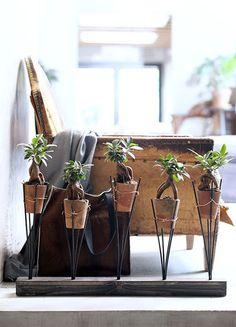 ginseng plantenhouder