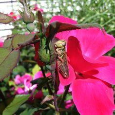Good afternoon Mr. Grasshopper