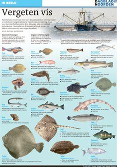 Vergeten vissoorten – Gerard van Es