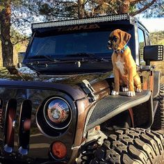 Dream life #Jeep #Dog #HappyValentinesDay