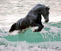 Horse romping in the sea