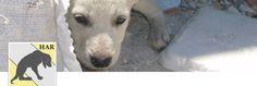 SPENDENKONTO HAR - Helping Animals Romania (registered animal welfare)        Bankverbindung:    RO35 RZBR 0000 0600 1613 1057 RAIFFEISEN BANK MOSILOR SWIFT CODE : RZBRROBU   oder    SPENDENKONTO HAR - Förderverein Treue-Pfötchen e.V. Sparkasse Ostunterfranken (BLZ 793 517 30),  Kontonummer: 910 59 66  IBAN: DE55 7935 1730 0009 1059 66;  BIC: BYLADEM1HAS    oder direkt auf der website von HAR und FV