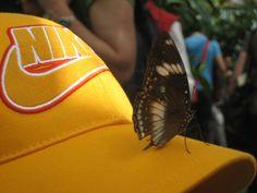 Mainau-Schmetterlingshaus