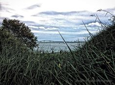 harbor, grass, landscape, bridge,