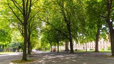 Studie: Stadtbäume wachsen schneller als Landbäume