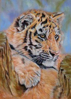 tigercub, refphoto: wetcanvas