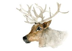 Reindeer portrait  print of  watercolor painting by TheJoyofColor