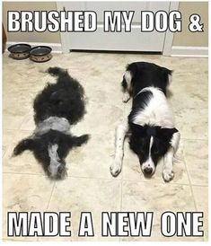 Funny Animal Pictures Of The Day 23 Pics - Funny Dog Quotes - Probably the best of these memes weve seen! That had to take some time! The post Funny Animal Pictures Of The Day 23 Pics appeared first on Gag Dad. Funny Animal Jokes, Funny Dog Memes, Really Funny Memes, Cute Funny Animals, Cute Baby Animals, Funny Dogs, Dog Humor, Funny Stuff, Funny Horses