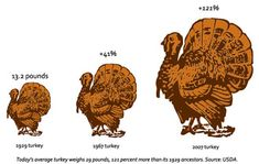 Give Thanks? Science Supersized Your Turkey Dinner - Wired Science