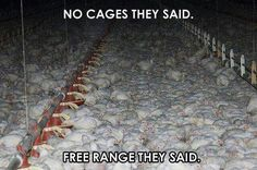 Buying cage free doesn't make it okay.