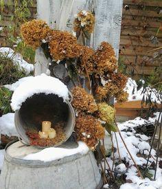 Kennt ihr frozen Hortensien❄❄❄? Wir hatten sie heute. Ich habe sie vom Schnee befreit und für ein letztes Foto als hübsch befunden😊 Schönen Restsonntag und gute Nacht🌟⭐🌟⭐ #frozen #hortensien #gardenlove #gartenliebe #cottagegarden #flowersoftheday #shabbydeco #vintage #zinkwanne #zinkeimer #schnee #snow #frost