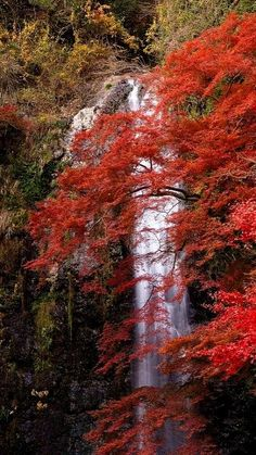 Minoh waterfall, Mino City, Osaka prefecture, Japan | Flickr - Photo by Tim Wilko