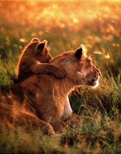 Lioness and cub. See, Mama? Over there!!