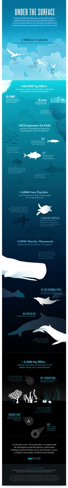 Infographic WIN. Five years into the Gulf oil disaster, scientists are still studying its impact on birds, whales, sea turtles, and other marine life—and the critical ecosystems beneath the waves. This infographic shows what we know, and it's not encouraging, for either the Gulf or future plans for offshore drilling.