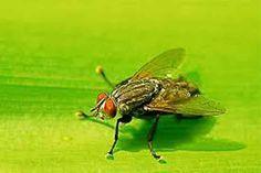 <p>Oinsecticidaé infalível, mas cobra um preço alto. Prejudica o meio ambiente e a saúdedas pessoas. Sem contar que o cheiro da maioria deles não é nem um pouco agradável! Por isso, ficam aqui, quatro ideias fáceis de fazer em casa para espantar as moscas, mosquitos, pernilongos e seus indesejáveis parentes. …</p>