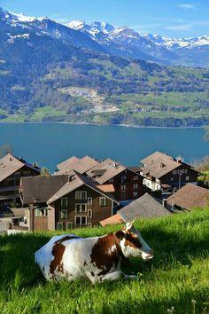 BEAUTY OF NATURE SWITZERLAND #Nature #Beautiful #Lakes #Waterfalls…