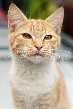 рыжик   Flickr - Photo Sharing!