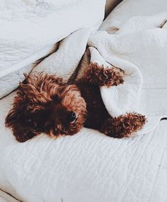 This little dog looks a lot like my friend's pup! So cute. Cute Puppies, Cute Dogs, Dogs And Puppies, Doggies, Animals And Pets, Baby Animals, Cute Animals, Cute Creatures, Dog Life