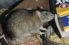 Protect your home with pest solutions glasgow. To hire our services visit the mentioned link.