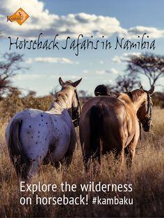 Discover the bush on horseback. Check out Namibias top riding spot and plan your dreamlike riding adventures at Kambaku Safari Lodge #horsesafari #safarionhorseback #reitsafaris #horses #kambaku #lodge #namibia #africa #afrika #safari #bestlodge #adventure #savanna #holiday #riding #horseriding