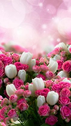 50 Ideas spring wallpaper iphone backgrounds nature pink flowers for 2019 Beautiful Flowers Wallpapers, Beautiful Rose Flowers, Pretty Wallpapers, Flowers Nature, Amazing Flowers, Pretty Flowers, Spring Flowers, Desktop Wallpapers, Flower Phone Wallpaper
