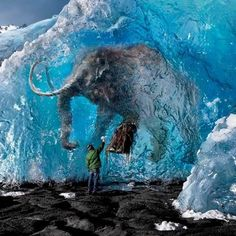 Frozen mammoth in Siberia.
