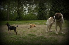 a little house in the woods: pets enjoy good weather too