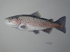 Rainbow Trout (original watercolor) by Goohsnest on Etsy