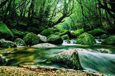 美しい森が魅力の白谷雲水峡も屋久島で絶対に外せないスポット!写真におさめたくなる絶景にたくさん出会えますよ。