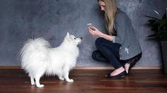 5 aplicaciones que mejoran el cuidado, la salud de tus mascotas. DETALLES: http://www.audienciaelectronica.net/2015/07/14/5-aplicaciones-que-mejoran-el-cuidado-la-salud-de-tus-mascotas/