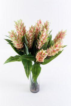 Ginger Flower - White/Pink
